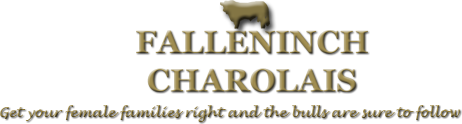 Falleninch Herd of Pedigree Charolais Cattle